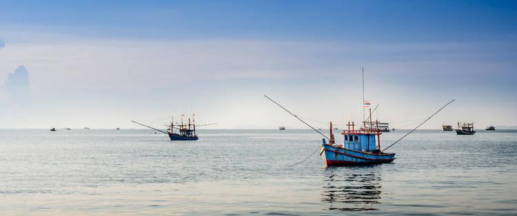 La Asombrosa Maquinaria de la Pesca
