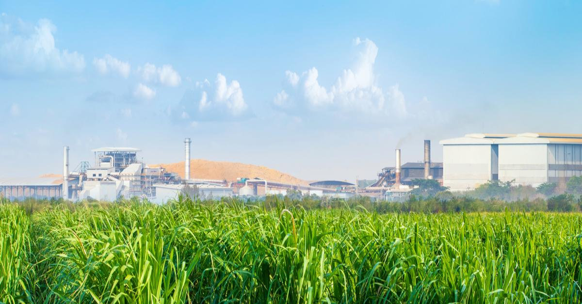 Bioetanol: todo lo que debes de saber acerca de este combustible vegetal
