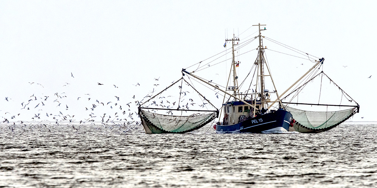 Los Lubricantes en la Industria Pesquera