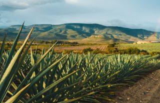 Industria del Tequila y China